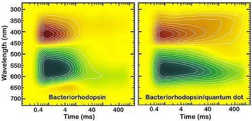 OLIS RSM 1000用于杂化细菌视紫红质/量子点体系的可调谐光循环动力学研究