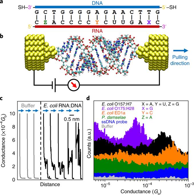 OLIS DSM 20 CD用于测量单分子电导检测和鉴定遗传物质
